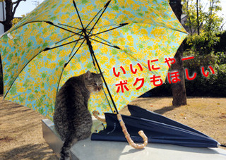 20180313_umbrellaB .jpg.jpgのコピー.jpg